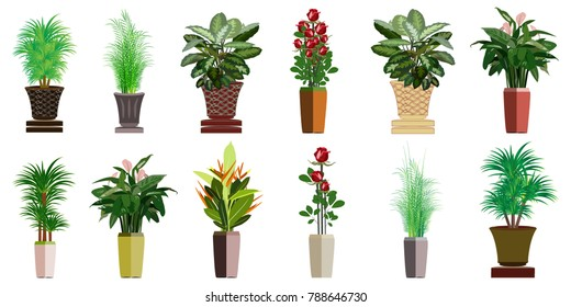 The collection of beautiful ornamental plants for the garden and home , Green foliage in pots , Roses with red flowers in the pot , Isolated tree vector.