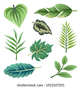 Collection of beautiful tropical leaves isolated on white background.
