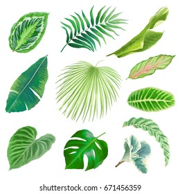 Collection of beautiful tropical leaves, vector illustration for your design.