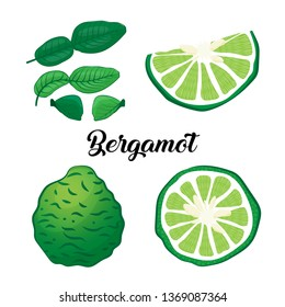 Collection bergamot isolated on white background. Vector illustration.