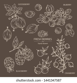 Collection of berries: bilberry, cranberry, blackberry and gooseberry. Vector hand drawn illustration