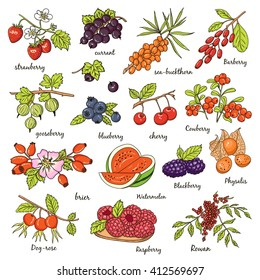 Collection of berries: strawberry, currant, sea-buckthorn, gooseberry, blueberry, cherry, brier, blackberry. Vector illustration of berries for design menus, recipes and packages product.