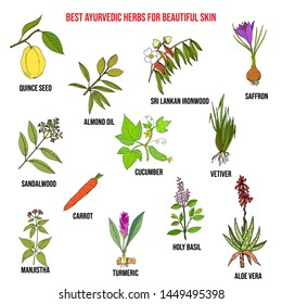 Collection of best ayurvedic herbs for beautiful skin. Hand drawn vector set of medicinal plants