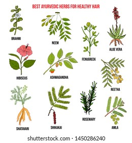 Collection of best ayurvedic herbs for healthy hair. Hand drawn vector set of medicinal plants