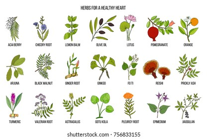 Collection of best herbs for healthy heart. Hand drawn vector set of medicinal plants