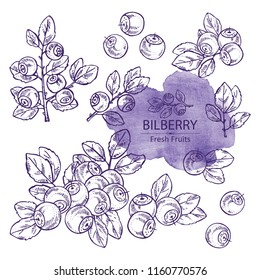 Collection of bilberry: berries and plant. Vector hand drawn illustration