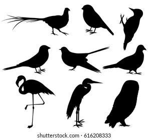 Collection of Bird Silhouettes. Set of birds pheasant and heron, shadoof and cuckoo, sparrow and owl. Vector illustration