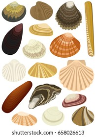 Collection of bivalve seashells isolated on white background