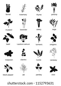 Collection of black silhouette herbs and spices, plants. Set of different herbs and spices fennel, rosemary, thyme, basil, mustard, rucola, celery, dill. Vector illustration