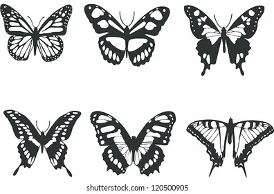 Collection black and white butterflies for design isolated on white (vector)