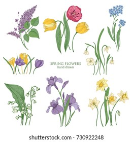 Collection of blooming spring flowers and flowering plants hand drawn in vintage style - tulip, lilac, narcissus, forget-me-not, crocus, lily of the valley, iris, snowdrop. Vector illustration.