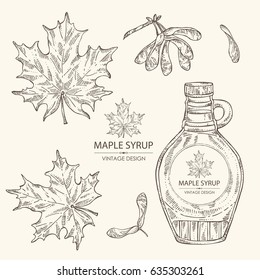 Collection of a bottle of maple syrup and maple leaves. Hand drawn