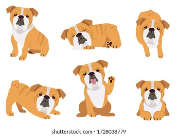 The collection of bull dog in many action. Graphic resource about bull dog for graphic, content, etc.