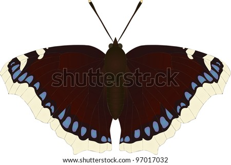 262110deb1bb0 Collection Butterflies Nymphalis Antiopa Camberwell Beauty Stock ...