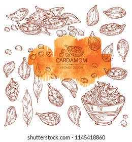 Collection of cardamom: seeds, leaves and a plate with seeds cardamom. Vector hand drawn illustration.