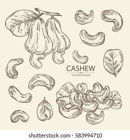 Collection of cashew, nut, fetus and leaf. Hand drawn