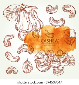 Collection of cashew, nut, fetus and leaf. Hand drawn.
