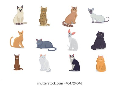 Collection Cats of Different Breeds. Vector isolated cat on white. Vector illustration of home pets with cute faces