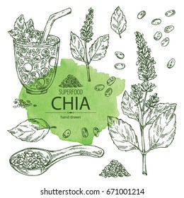 Collection of chia: cocktail with chia and blueberries, plant and seeds. Superfood. Vector set hand drawn illustration.