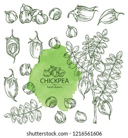 Collection of chickpea: chickpea bean, pod, chickpea plant and leaves Vector hand drawn illustration