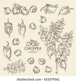 Collection of chickpea: chickpea bean, pod, chickpea plant and leaves Vector hand drawn illustration.