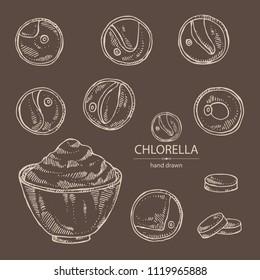Collection of chlorella: chlorella seaweed, powder and tablet. Unicellular green algae. Edible seaweed. Vector hand drawn illustration.