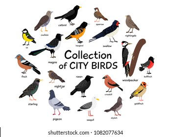 Collection of city birds