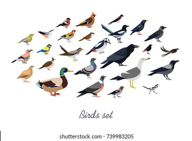 Collection of city  and wild forest birds drawn in flat geometric style, side view. Set of colorful cartoon animals isolated on white background. Colored ornithological vector illustration.