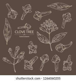 Collection of clove tree: buds and leaves. Vector hand drawn illustration