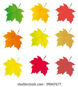 Collection of colored leaves to the design. Vector illustration
