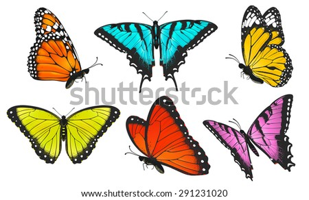 Collection Colorful Butterflies Butterfly Vector Illustration Stock
