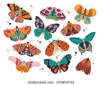 Collection of colorful hand drawn butterflies and moths on white background. Stylized flying insects with decorative elements, vector illustration.