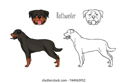 Simple Continuous Line Art : Dog line drawing images stock photos & vectors shutterstock