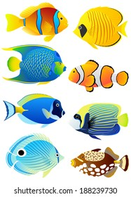 Collection of colorful tropical fish.