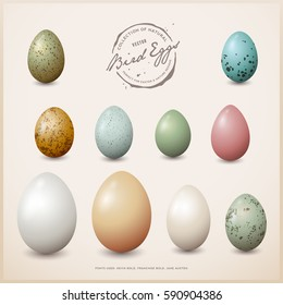 collection of colorful vector bird eggs with different shapes, sizes and textures - perfect for easter, spring or other nature themed design projects