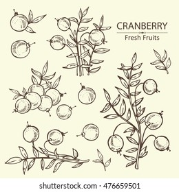 Collection of cranberry . hand drawn
