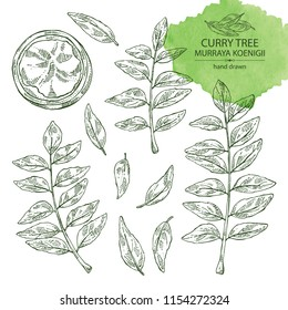 Collection of curry tree: branch, powder and curry leaves. Murraya koenigii. Vector hand drawn illustration.