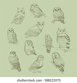 Collection of a cute cartoon of different owls.