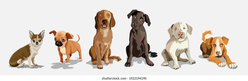 Collection with cute dogs of different breeds. Set of funny dogs, on a white background. Furry human friends home animals