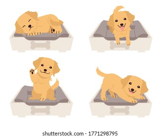 The collection of cute golden retriever on the mattress basket or bed of dog in flat vector style. Graphic resource about set of dogs for graphic, content, etc.