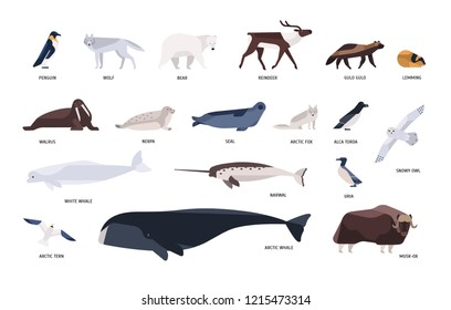 Collection of cute polar animals, birds, marine mammals inhabiting Arctic and Antarctica isolated on white background. Polar fauna set. Bright colored vector illustration in flat cartoon style.