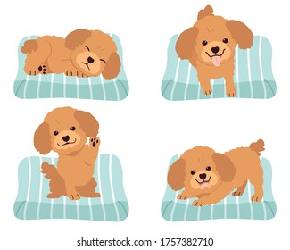 The collection of cute poodle on the mattress or bed of dog in flat vector style. Graphic resource about set of dogs for graphic, content, etc.