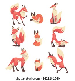 Colección de personajes de zorros rojos recortados Ilustración vectorial de dibujos animados