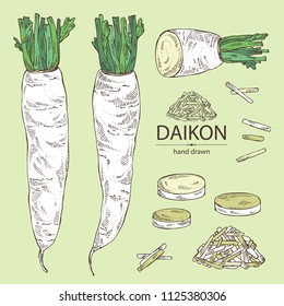 Collection of daikon: root and a piece of daikon. Chinese radish. Vector hand drawn illustration.
