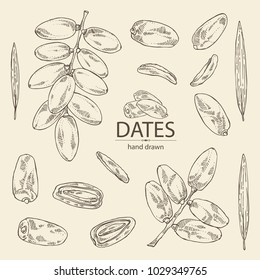 Collection of date fruit: branch, date fruits and leaves. Vector hand drawn illustration.