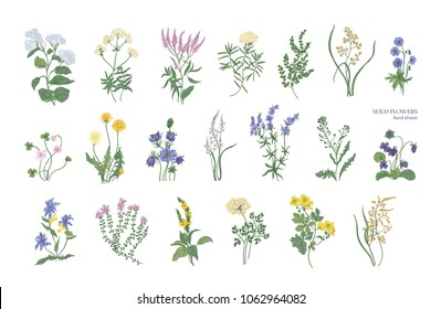 Collection of detailed drawings of different botanical flowers and decorative flowering plants isolated on white background.Bundle of elegant floral decorations.Colorful realistic vector illustration