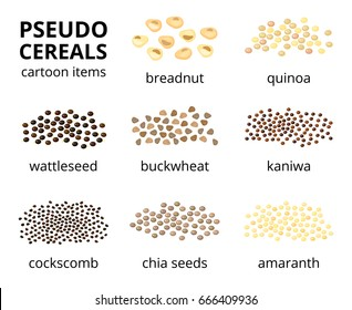 Collection of different cartoon pseudo-cereals isolated on white background with names.