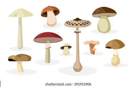 Collection of different edible and poisonous mushrooms illustrations