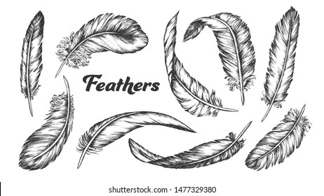 Collection of Different Feathers Set Ink Vector. Standing, Flying And Lying Fluffy Bird Feathers. Epidermal Growths Form Distinctive Outer Covering Or Plumage. Monochrome Hand Drawn Illustrations