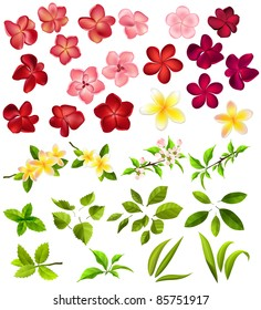 Collection of different flowers and leaves on white